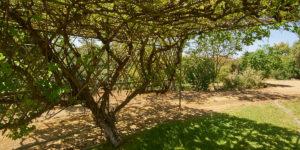 Barossa Idyll Landscape